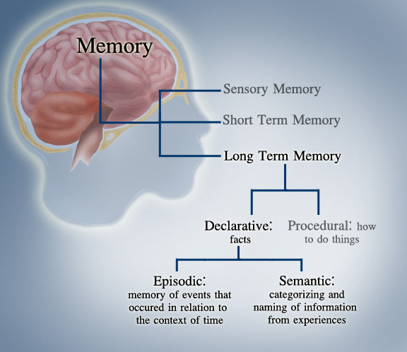 Causes of Memory Loss and Dementia
