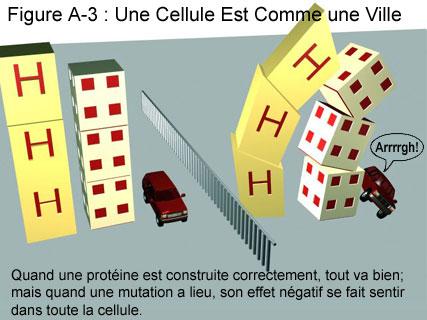 Fig A-3: Une Cellule est Comme une Ville