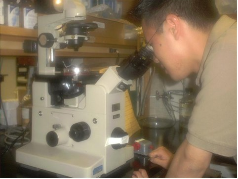 Fig AH-4: HOPES team member Shawn Fu looks at striatal nerve cells under a microscope.