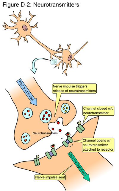 Fig D-2: Neurotransmitters