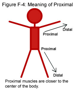 Fig F-4: Meaning of Proximal