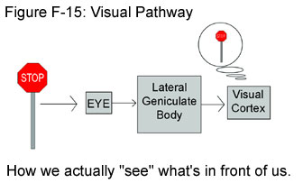 Fig F-15: Visual Pathway