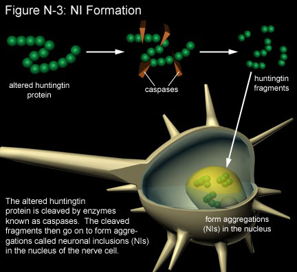 Fig N-3: NI Formation