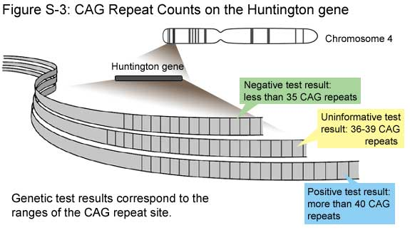 Fig S-3: CAG Repeat Counts on the Huntington Gene