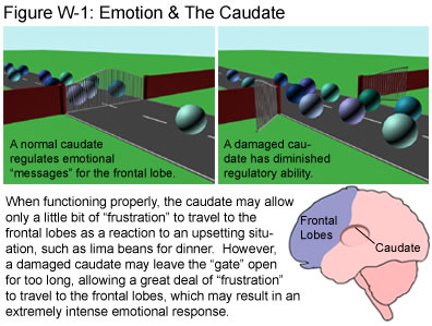 Fig W-1: Emotion & the Caudate