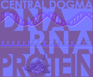 Fig P-1: The Central Dogma of Molecular Biology