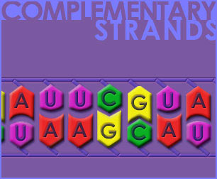 Fig P-6: Complementary Strands