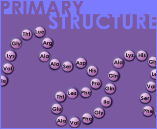 Fig P-13: Protein Structure