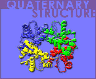 Fig P-18: Quaternary Structure