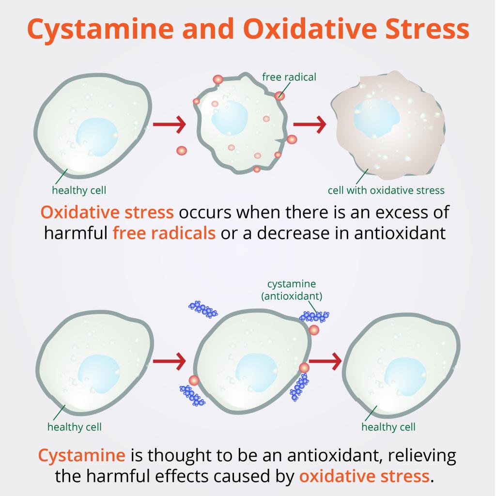 oxidativestress-01