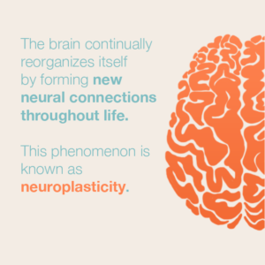 Neuroplasticity – HOPES Huntington's Disease Information