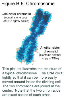 An Introduction To Dna And Chromosomes Text And Audio