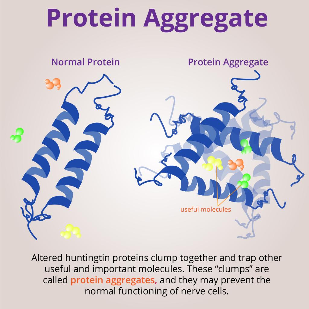 ProteinAggregates-01