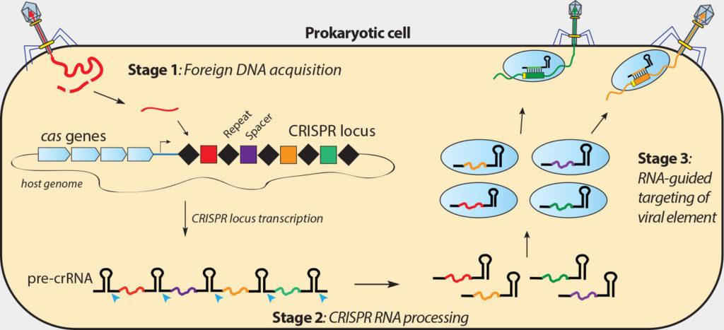 crispr-image-1