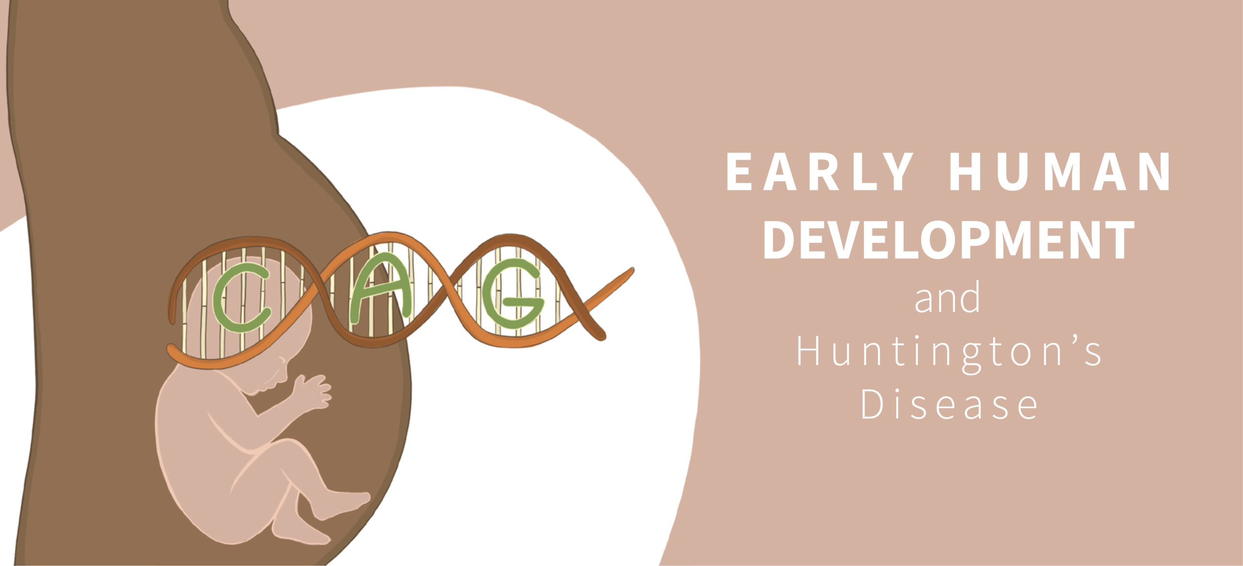 Early Human Development and HD